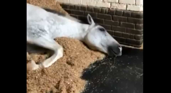 The image shows the sleeping horse.